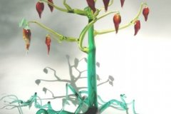 pepper-tree