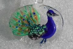 2013-feb-fr-peacock