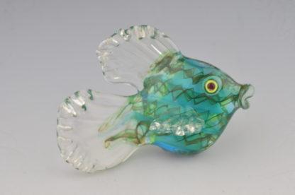 fancy teal fish